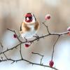 Cómo: Atención a los pájaros del invierno