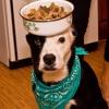 Cómo cocinar hígado para su perro