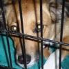 Cómo cajón entrenar a un cachorro de rescate con ansiedad por separación