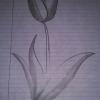 Cómo dibujar un tulipán