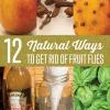 ¿Cómo deshacerse de Fruit Flies Naturalmente | Trucos Vida bricolaje