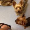 Cómo obtener sus mascotas al veterinario usados