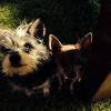 Cómo dar sus perros un baño