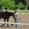Cómo preparar a un caballo para Mostrar