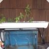 Cómo Cómo construir un jardín hidropónico