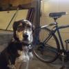 Cómo instalar la correa del perro Walky Bike