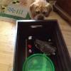 Cómo hacer un juguete Caja de encargo del perro
