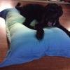 Cómo hacer una cama del perro