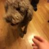 Cómo hacer un perro de tragar una píldora