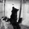 Cómo hacer un perro de juguete y Cómo mantener Ur Perro Ocupado / activo