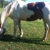 Cómo hacer una mosca en spray para los caballos con la piel sensible