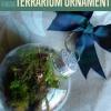 Cómo hacer un terrario Ornamento colgante | Terrario DIY
