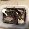 Cómo hacer un caracol de tierra de la jaula