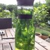 Cómo hacer un verano refrescante bebida Mint
