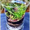 Cómo hacer un terrario -Tabletop Jardín