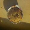 Cómo hacer Muffins de Manzana y Canela