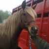 Cómo hacer lindas clips con cuentas Mane para su caballo