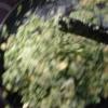 Cómo hacer Claras de huevo verde revueltos