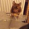 Cómo hacer Hamster Treats