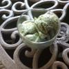 Cómo hacer Matcha (té verde) yogurt