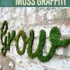 Cómo hacer Musgo Graffiti   Proyecto DIY fresca