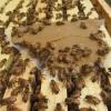 Cómo hacer empanadas de polen para las abejas