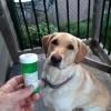 Cómo hacer que su perro AMOR tomar pastillas