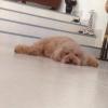 Cómo hacer que su perro a sentarse, de la pata, y Cambio