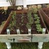 Cómo hacer tu propio jardín de hierbas