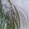 Cómo alimentar a su planta con hojas de té usadas