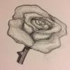Cómo lápiz dibujar una rosa