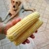Cómo preparar y almacenar maíz dulce (y tratar a su perro)
