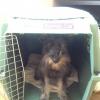 Cómo poner a su cachorro en una perrera sin lucha