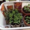 Cómo reciclar rollos de papel higiénico para la siembra de primavera