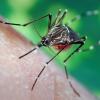 Cómo aliviar la picazón de una picadura de mosquito