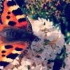 Cómo tomar hermosas Naturaleza Fotos