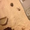 Cómo cuidar de cangrejos ermitaños