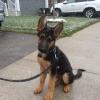 Cómo enseñar a su perro a sentarse!
