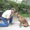 Cómo enseñar a su perro a dar besos