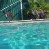 Cómo enseñar a su perro a nadar bajo el agua: D