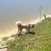Cómo enseñar a su perro a nadar