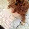 Cómo entrenar Cachorro utilizar Pee Pad
