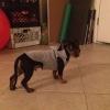 Cómo upcycle Pantalones de chándal con capucha En un perro
