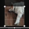 Cómo utilizar el iOS App Flickr