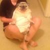 Cómo lavar un perro pequeño