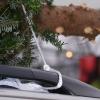 O, árbol de navidad-O, Variedad