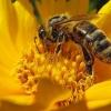 10 mejores maneras de lidiar con las abejas