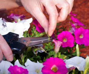 La importancia de Deadheading